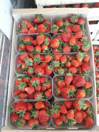 Strawberry Ukraine