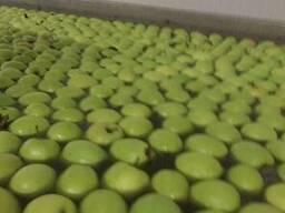 Яблоки из Польши! Apples from Poland! - photo 2