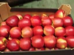 Яблоки из Польши! Apples from Poland! - photo 4