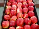 Apple Ligo from Poland // Export - фото 3