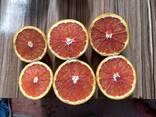 Грейпфрут - фото 1