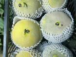 Свежие арбузы и дыни - photo 8