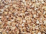 Walnut wholesale, from Kyrgyzstan / Manufacturer - photo 2