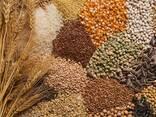 Зерно и зерновые - photo 1